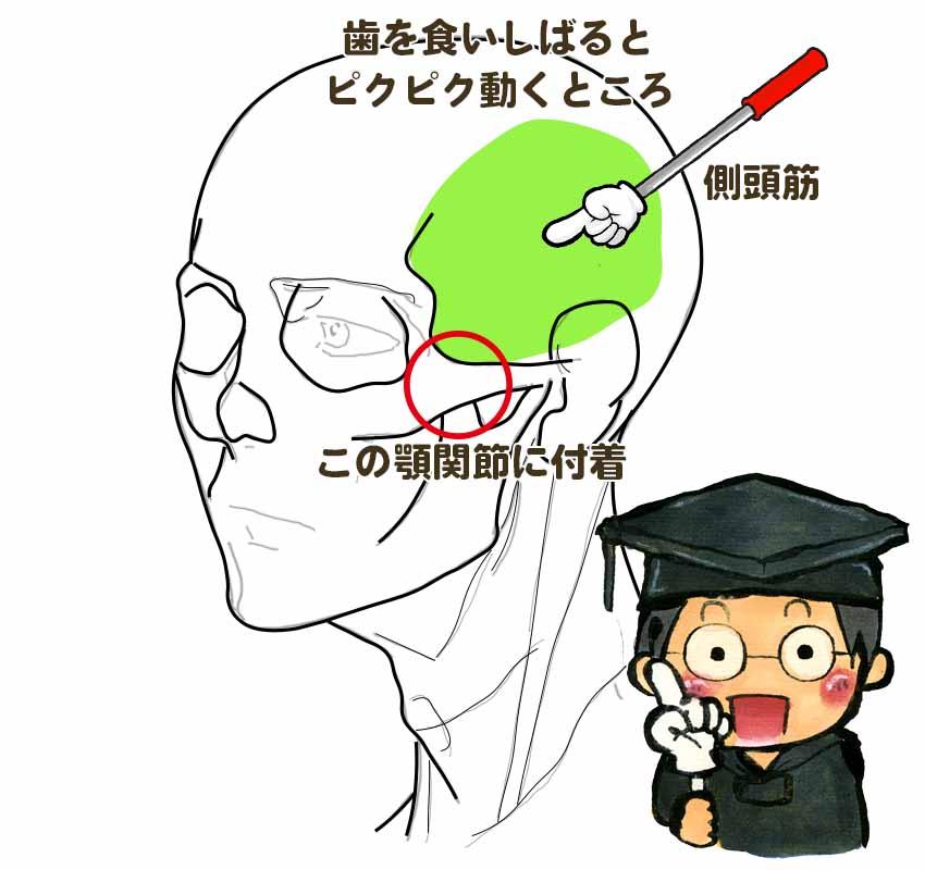 頭痛における咀嚼筋